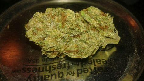 platinum-bubba-922